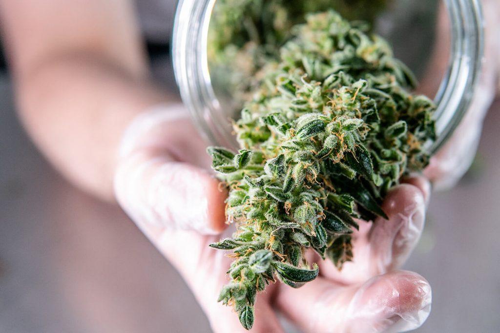 CBD hemp flower strains
