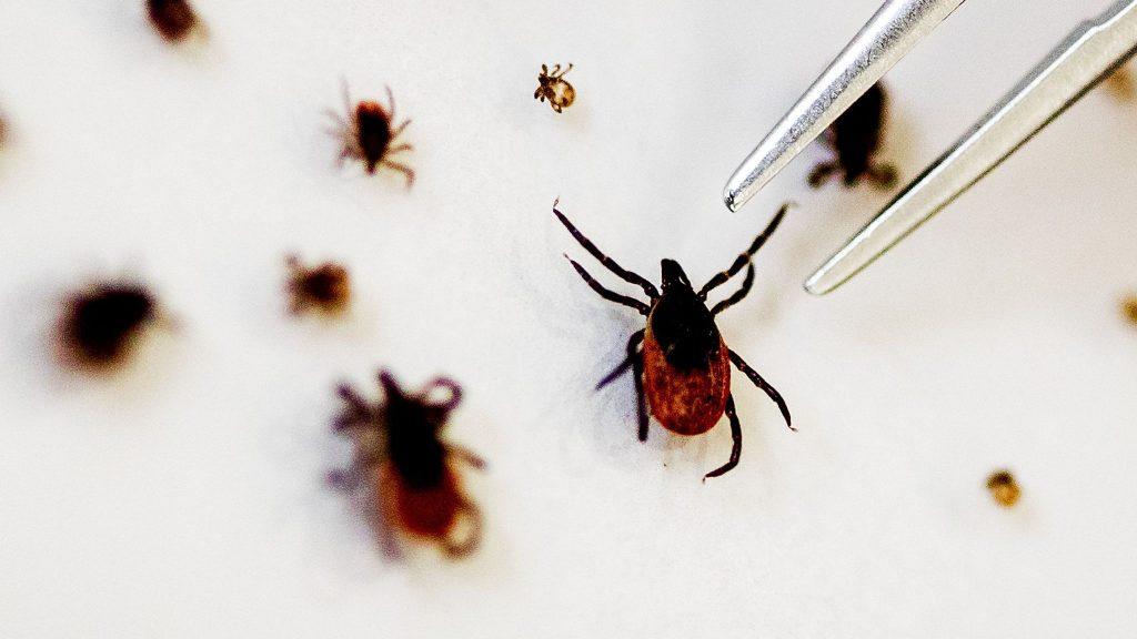 pest control ticks